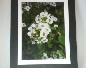 8.5 x 11 in. Print - Little White Flowers