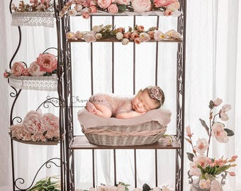Digital backdrop, background newborn baby girl peach flowers pink window pink blanket