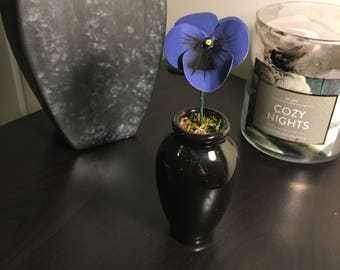 Blue pansy in a black vase