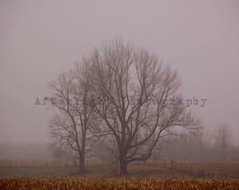 Country morning fog photograph,