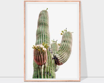Cactus print, cacti print, desert cactus wall art, nature print, pink and green wall art, instant download cactus wall decor for home