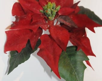 floral: poinsettia, red spade