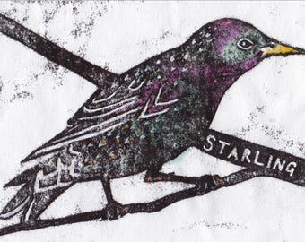 Starling Card | Greetings Card | British Birds | Printed in the UK on Recycled Card