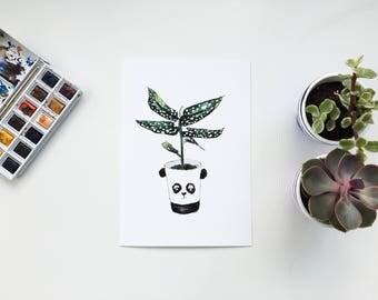 Panda print, Begonia print, Begonia art, Plant art, Housewarming, Plant lover, Begonia plant, Panda gift, Panda lover, panda pot,