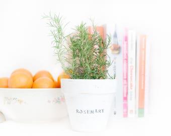 Rustic Herb Pot