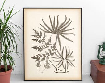 Instant download printable art, Fern wall art, Vintage fern print, Botanical wall art, Botanical decor, Antique botanical print, Digital