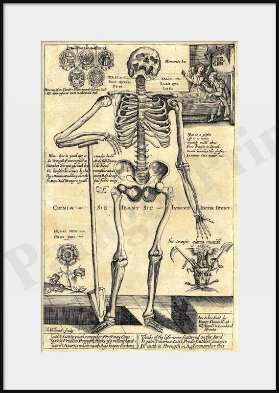 1620 human skeleton leaning on spade giclee print poster, Skeleton