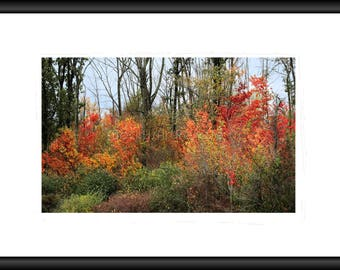 Colorful Woods, Free Shipping, Photography, Wall Art, Framed Print, Print, Canvas Wrap, Canvas Framed, Autumn Color, Fall, Forest, Home Deco