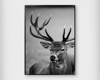 Stag Print | Nature | Black - White | Deer - Photography - Poster