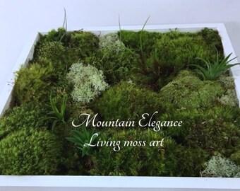 Living Wall Moss Art Kit DIY Various Sizes