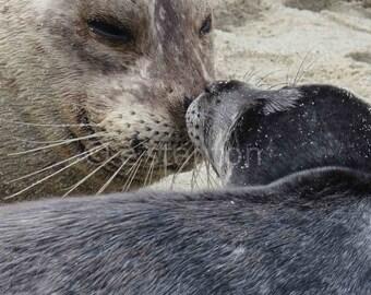 Harbor Seal or Sea Lion Photo Wall Art