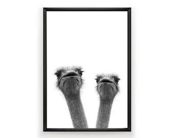 Ostrich Print, Nursery Wall Art, Nursery Decor, Nursery Animal Wall Art, Ostrich Print Wall Art, Woodland Animals, Nursery Art Print,