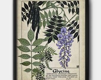 Wisteria · French Illustration · Plant · Vintage · 1900s · Instant Download · Botanical · Printable #176