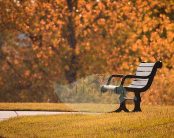 Autumn Bench Digital Photography Backdrop Background