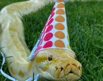 Snake Party Hats - 3 Sizes Fit Most