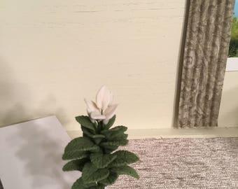 Full floor houseplant with white flowers