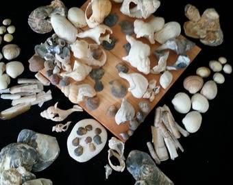 Sea shells home decor Sea shell set ornament Coastal decor Terrarium Aquarium Fish tank Craft Eco gift