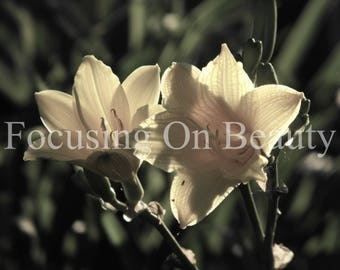 Pictures of Flowers / Pale Yellow Lilies / Floral Photography