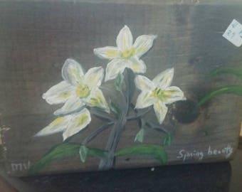 Missouri wildflower - Spring Beauty