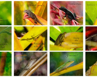 EVERYDAY CARDS. PICK 5. Cute lizard greeting cards. Set of 5 cards. Lizard cards.