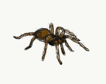 ESOL Tarantula Spider