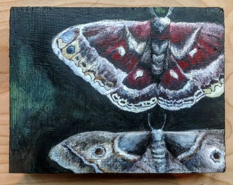 Two Moths - painting