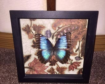 Taxidermy Framed Butterfly