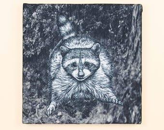Raccoon Surprised