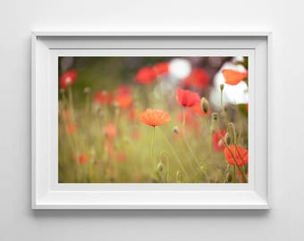 Red Poppies, Original Photography Print, Flowers, Wall Art, Decor