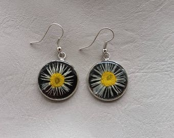 Round 2 cm Daisy dried flowers and resin earrings