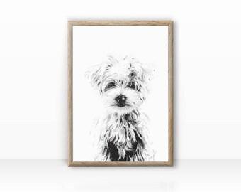 West Highland Terrier, dog portrait