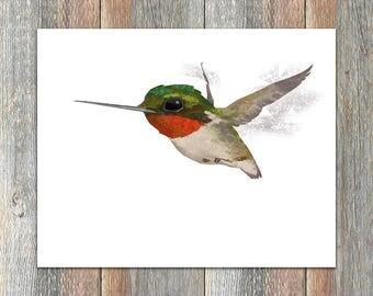Ruby-throated Hummingbird Bird Print