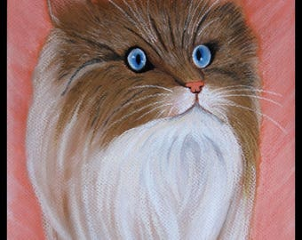 Original illustration painted in pastel on Canson 300 g/m²petit angora cat
