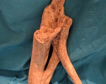 Chesapeake Bay Driftwood