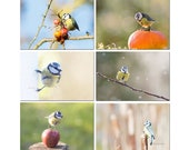 Set of six small bird pictures, the blue tit year round, small birds pictures throughout nature decor