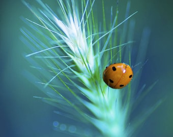 Ladybug in soft colors and streaks 20 x 30 poster