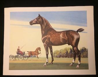 Beautiful Sam Savitt Horse lithograph circa 1950