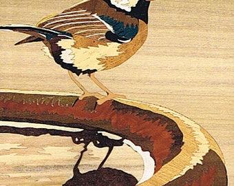 marquetry chickadee on a pond