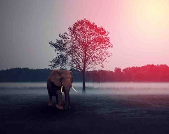 Foggy Elephant