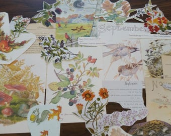 Fall Autumn Collage Pack, Fall Autumn Paper Ephemera, 20+ pieces paper pack, Paper ephemera lot, junk journal pack, theme paper lot