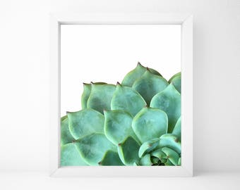 Succulent Art Print, Botanical Print, Plant Wall Art, House Plant Print, Green Plant Print, Green Plant Art, Printable Wall Art