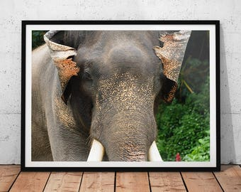 Asian Elephant Photo // Thailand Wildlife Photography Print, Nature Wall Art, Animal Home Decor, Asiatic Elephant Photo, Elephant Portrait