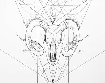 Aries Ram Drawing - Art Print
