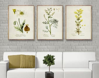 Vintage Botanical Three Poster Set, Yellow 3 Poster Set, Vintage Botanical  Prints, Yellow