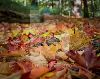 Autumn Forest Trail | Landscape Photo Art | Nature Lover Gift | Fine Art Photography | Personalization | BDPhotoShoppe | Home Office Decor