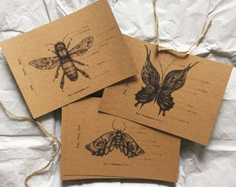 Insect Specimen Postcards