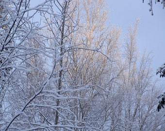 Trees Covered with Snow and Lit by Sun | Digital Download