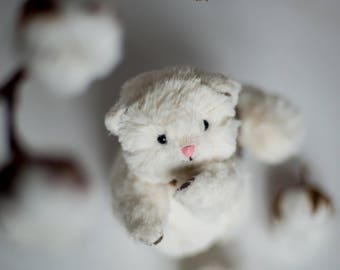 Teddy Cat