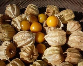 Ground cherry seeds - Physalis solonacea