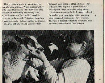 Kids Are Baby Goats – First Edition + Janet Chiefari + 1984 + Vintage Kids Book